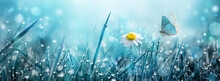 Wild Chamomile Flower And Flyi...
