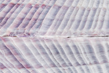 Clam Shell Patterns, Close Up