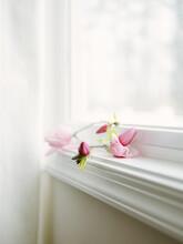 Delicate Tulip Magnolia Flowers On Window Ledge