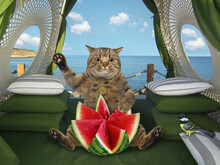 A Beige Big Eyed Cat Eats A Watermelon, Carved In The Shape Of A Flower In A Restaurant By The Sea.