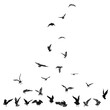 Set of seagulls birds, nautical sailor tattoo sketch. Black stroke of flying sea gull silhouettes on white background. Marine set. Drawings of different shapes of water birds in the flock. Vector.