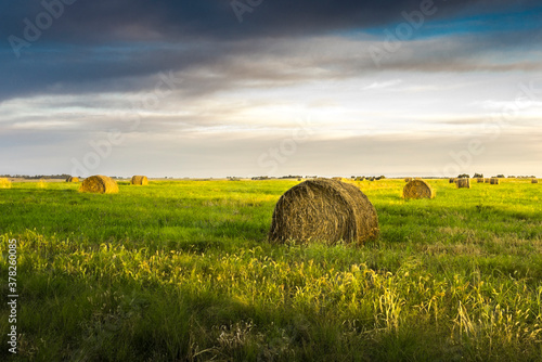Fototapeta fardos de paja para alimentar al ganado, campo argentino