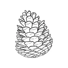 Hand Drawn Pine Cone. Vector I...
