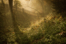 Old Fence In Autumn Park. Morn...