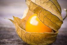 Physalis Or Cape Gooseberry Fruit. Retro Style Processing.
