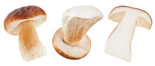 Boletus Edulis Or Cep Isolated On White Background. Collection