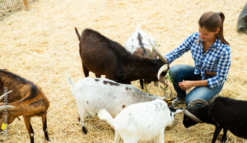 Smiling female farmer feeding goats with green grass in outdoor enclosure on far Canvas Print