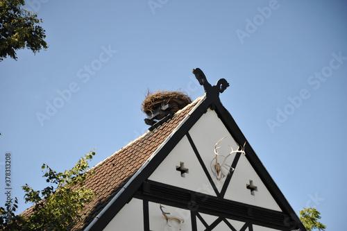 adlerhorst geier nest storch stärche bau nest nisten nistanlage horst adler Canvas Print