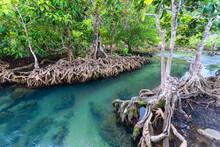 Jungle River In Thapom Mangrov...