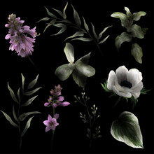 Lush Watercolor Flowers On The Black Background With Deep Shadows