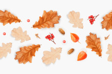 Autumn Composition. Frame From...