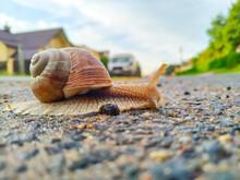 A Snail Crawls Across An Aspha...