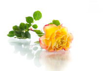 Yellow Rose With Green Leaves, Isolation On White
