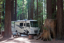 Camping In The Woods Between Mammoth Trees