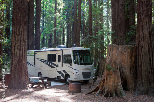 Obraz Camping in the woods between mammoth trees - fototapety do salonu