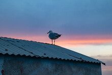 Seagull High On A Roof At Sunset
