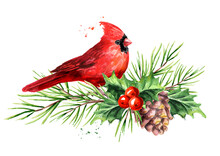 Red Bird Cardinal On The Cedar Branch With Cones And Holly Berries Symbol Of Christmas, Watercolor Hand Drawn Illustration Isolated On White Background