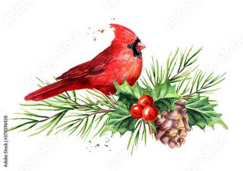 Red bird Cardinal on the cedar branch with cones and holly berries Symbol of Chr Poster Mural XXL