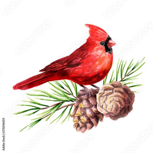 Tela Red bird Cardinal on the cedar branch with cones, Symbol of Christmas  Watercolo