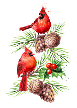 Red Birds Cardinal On The Cedar Branch With Cone, Symbol Of Christmas, Watercolor Hand Drawn Illustration Isolated On White Background