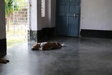 Dog Sleeping On A Porch