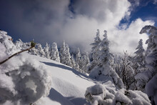 Snow-covered Trees In Mountains