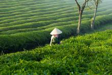 Mocchau Highland, Vietnam: Far...