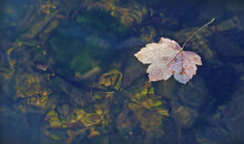 Autumn Leaves On The Water