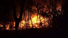 Forest Fire At Night Raging Fl...
