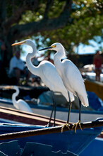 Herons Couple On Boat Anchored On A Beach
