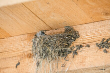 Empty Swallow's Nest On Wooden...