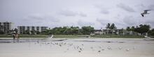 Birds On The Beach Is Siesta K...