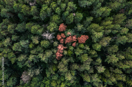 Aerial view of the green forest in early autumn