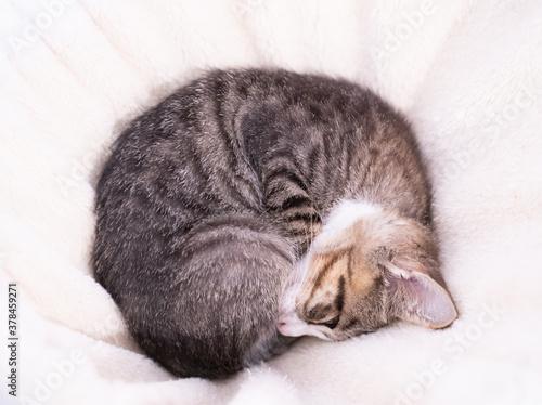 丸くなって寝る子猫