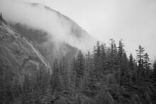 Fog Over Rainforest In Fords T...