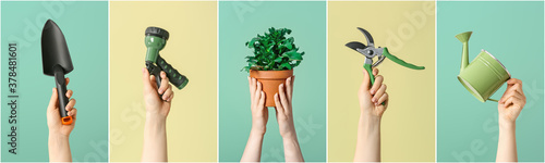 Canvastavla Female hands with gardening tools and houseplant on color background