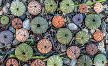 Colorful Sea Urchin Shells On Pebbles And Seaweed, Natural Seamless Pattern Background