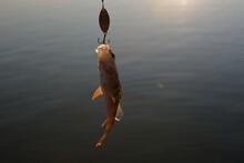 Summer Fishing, Perch Fishing ...