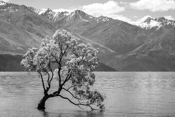 Panel Szklany Rzeki i Jeziora BnW Willow Tree
