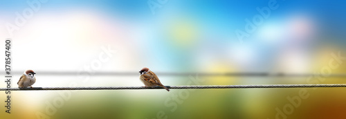 Birds on wire sitting apart. Social distancing conceptual theme. Fotobehang
