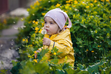 Little Beautiful Girl In A Pink Cap And A Yellow Jacket Sits In A Field Of Yellow Dandelions And Flowers