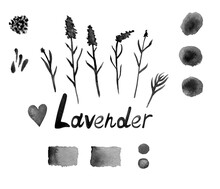 Lavender Set With Flowers, Buds, Branches, Seeds, Heart, Palette And Lettering. Black-white Watercolor Botanical Picture. Design For The Fabric, Posters, Wallpapers, Covers, Packaging, Wrapping.