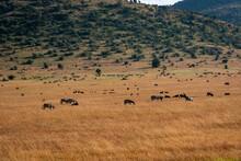 ケニアのマサイマラ国...