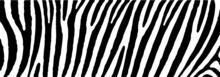 Safari Zebra Print Stripes Str...