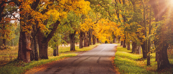 old asphalt road with beautiful trees in autumn