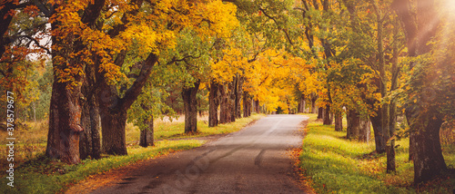 Obraz old asphalt road with beautiful trees in autumn - fototapety do salonu