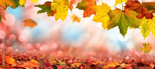 Fotografía Bunte Blätter im Herbst verzieren einen breiten unscharfen Hintergrund im Wald