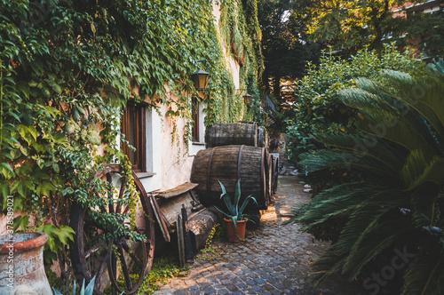 Fototapeta wine barrels on the side of ivy covered cottage obraz