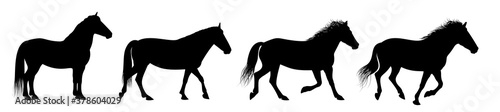 Fotografie, Obraz The horse silhouettes are isolated on the white background.