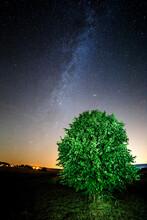 Vertical Shot Of A Green Tree ...